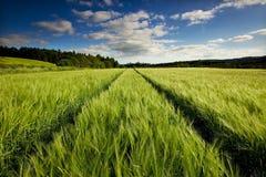Barley field. Near Thornhill in Scotland Stock Photos