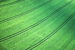 Barley field. In early summer royalty free stock photos