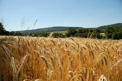 Barley Field Stock Images