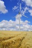 In barley field Stock Image