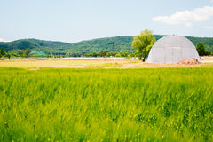 Barley field with blue sky Royalty Free Stock Photo