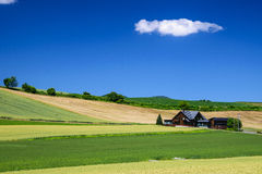 Barley Field with cottage in Biei province, Hokkaido, Japan Stock Images