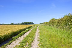Barley field and farm track Royalty Free Stock Photography