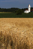 Barley field (Hordeum vulgare) with small church Stock Image