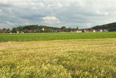 Barley field landscape Stock Images