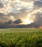 Barley field during stormy day Stock Photos