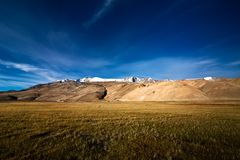 Barley field at Tso Moriri Lake. India, Ladakh Stock Photography
