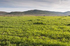 Barley fields in an agricultural landscape in La Mancha. Ciudad Real Province, Spain. In the background can be seen the Toledo Mountains Royalty Free Stock Image