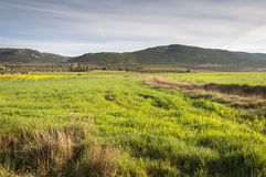 Barley fields in an agricultural landscape in La Mancha. Ciudad Real Province, Spain. In the background can be seen the Toledo Mountains Stock Images