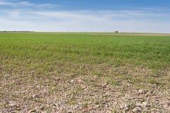 Barley fields Stock Photography