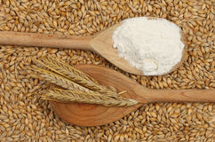 Barley and flour Stock Photography