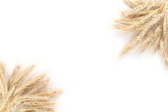Barley frame Royalty Free Stock Photography