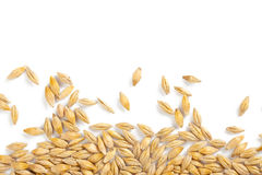 Barley grain. Photo shot of barley grain Royalty Free Stock Photography