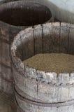 Barley grain in barrel Stock Image