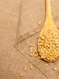 Barley grain on a canvas Royalty Free Stock Photography
