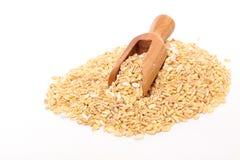 Barley grain Stock Photography