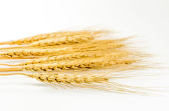 Barley grain isolated on white background Royalty Free Stock Images