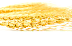 Barley grain isolated on white background Stock Photography