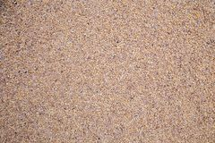 Barley grain malt background. Texture. ingredient in cooking and beverage production Royalty Free Stock Images