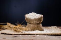 Barley grain in sack bag Stock Photos