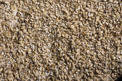 Barley grain. The view from the top. Product for beer production.  Stock Image
