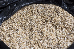 Barley grain. The view from the top. Product for beer production.  Stock Photos
