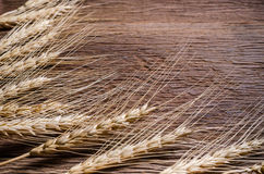 Barley grain on wooden table. Barley grain frame on wooden table and copy space for text Stock Photo