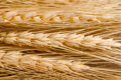Barley grain on wooden table Royalty Free Stock Images