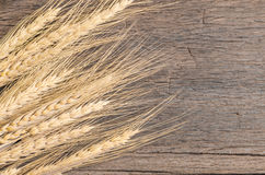Barley grain on wooden table Royalty Free Stock Photo