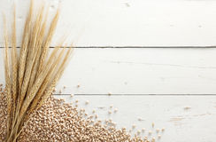 Barley with grains Stock Photos
