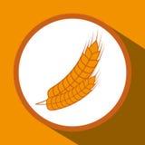 Barley grains design Royalty Free Stock Image