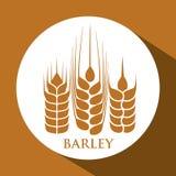 Barley grains design Royalty Free Stock Photo