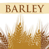 Barley grains design. Barley concept with grains design, vector illustration 10 eps graphic Stock Photography