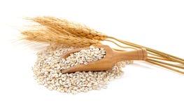 Barley grains Royalty Free Stock Photography