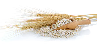 Barley Grains tn the scoop  on White Background Stock Photos