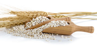Barley Grains tn the scoop  on White Background Royalty Free Stock Photography