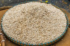Barley grains in the tray on the wooden table stock images