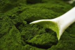 Barley grass powder Stock Images
