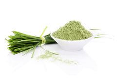 Barley Grass. Royalty Free Stock Photos