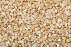Barley groats Royalty Free Stock Image