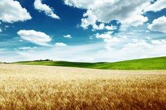 Barley hills Tuscany, Italy Stock Photography