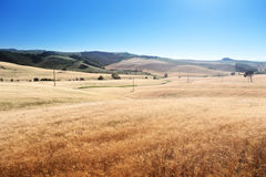 Barley hills Tuscany Stock Photo