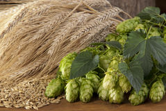Barley and hop-cones Stock Photo