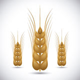 Barley Icons Royalty Free Stock Images