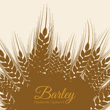 Barley Icons Stock Photography