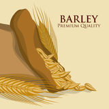 Barley Icons Stock Images