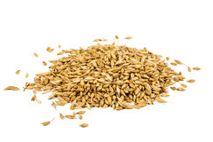 Barley on white. Barley isolated on white background with copy space Royalty Free Stock Images