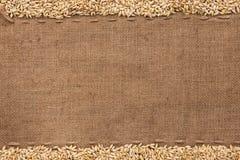 Barley lying on sackcloth Royalty Free Stock Photography