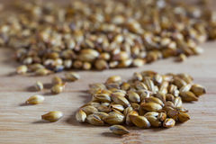 Barley malt. Brewing barley malt close up Royalty Free Stock Image