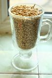Barley malt. Glass filled with malted barley grain standing near a window Stock Photos